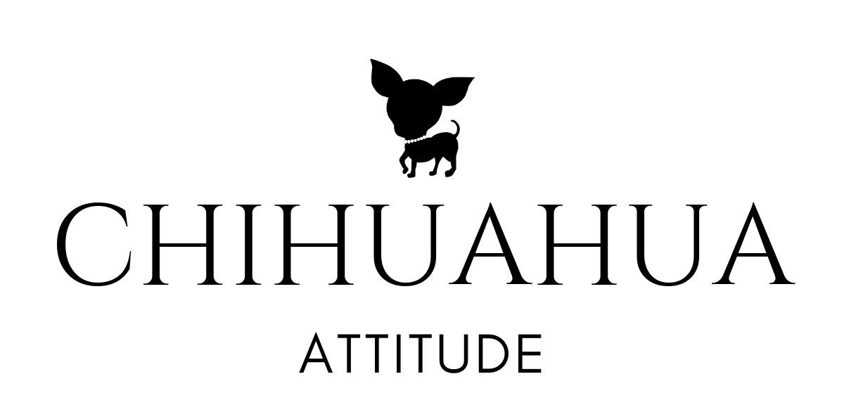 Chihuahua attitude